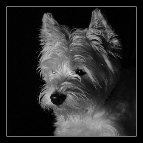 Moorhund Jenny vom Schönblick